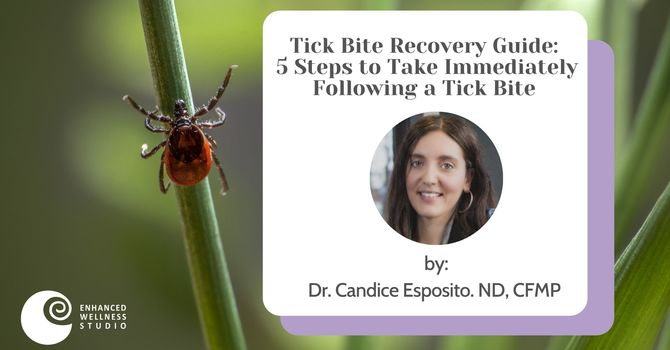 Tick Recovery Guide: 5 Key Action Steps to Immediately Take Following a Tick Bite image